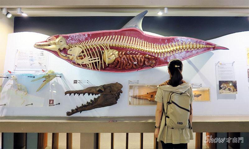 展覽介紹-恐龍主題展-古生物館-台博館