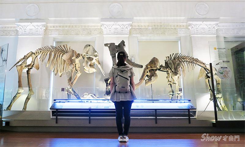 展覽心得-台博館-恐龍主題展-古生物館-